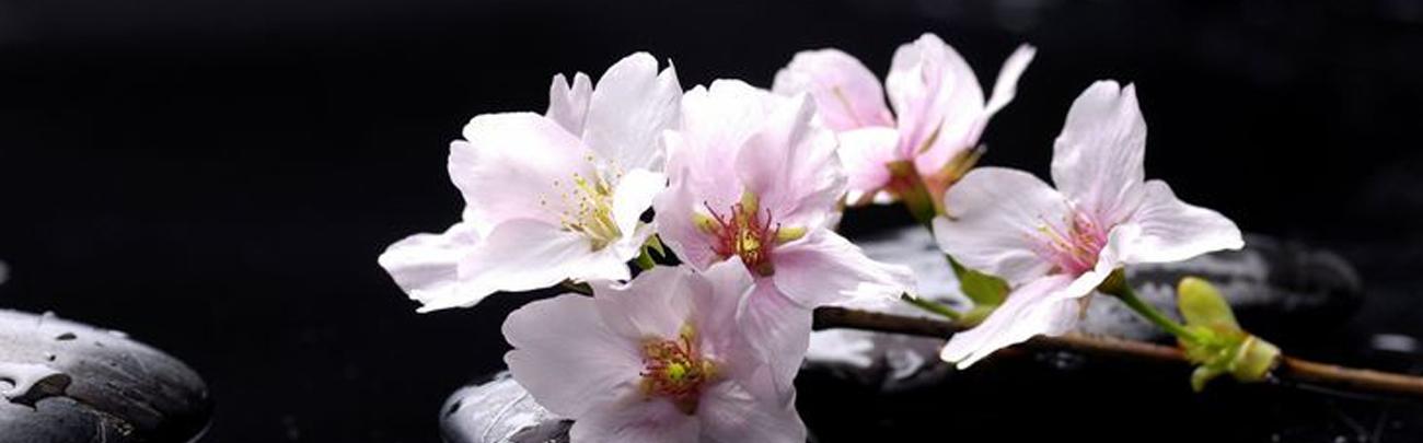 image fleur 2